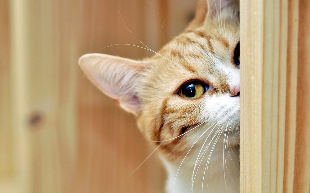 Imagem disponível em: http://www.fotosefotos.com/admin/foto_img/foto_big/gato_curioso_7297530c1bafbc1584ccd115c726786c_1%20(6).jpg