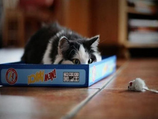 Afinal, os gatos domesticados são ou não são caçadores?