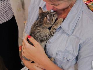 Saiba como funciona o olfato dos gatos