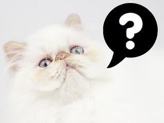 30 curiosidades sobre os gatos