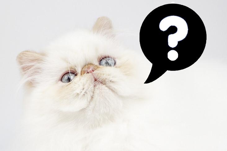 Imagem disponível em: http://www.catchannel.com/images/ask-cat-question-232.jpg