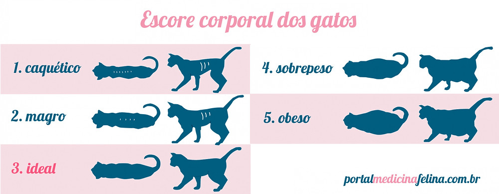 Fonte da imagem: http://portalmedicinafelina.com.br