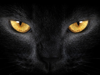Olhos dos gatos