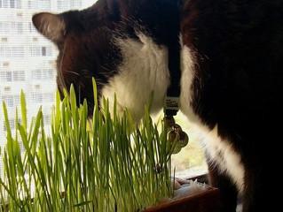 Plantas NÃO tóxicas para gatos