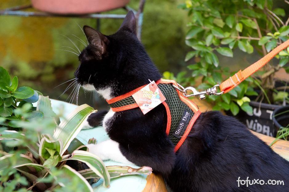 Foto: http://fofuxo.com.br/adestramento/gato-na-coleira.html