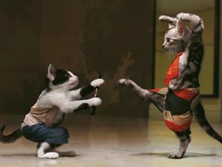 Brincando ou brigando?