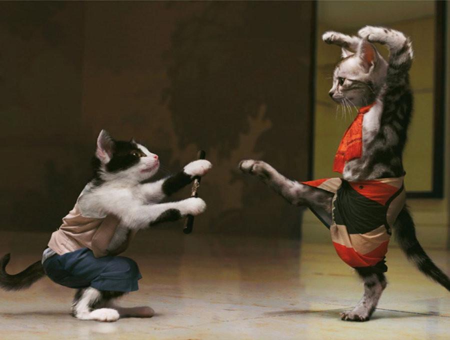 Fonte da imagem: https://gatilspiritland.files.wordpress.com/2014/06/luta-de-gatos.jpg