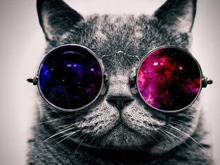 Gatos podem/devem tomar sol?