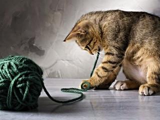 O que é síndrome de pica nos gatos?