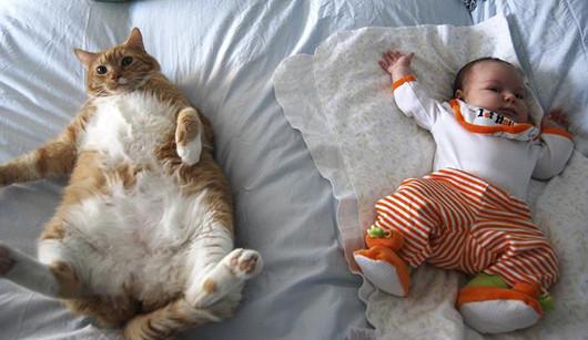 Fonte da imagem: http://www.besosdegato.com/wp-content/images/fotos-gatos/bebes-y-gatos-2.jpg