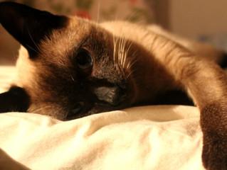 Amor felino: como me tornei mãe do Boris e Cesar
