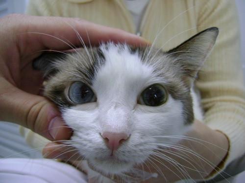 Lesões nos olhos