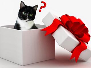 Gato não é presente!