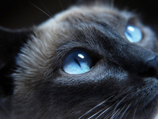 A História conta: gatos e humanos têm uma relação mais profunda do que imaginamos