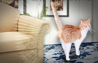 Como lidar com o territorialismo dos gatos