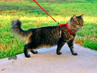 Você já ouviu falar em Gato-Guia?