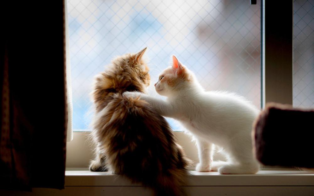 Fonte da imagem: http://www.fotosefotos.com/admin/foto_img/foto_big/gatos_se_abracando_ca5d5cb19049aa6455f7e32e46d5cc21_1%20(56).jpg