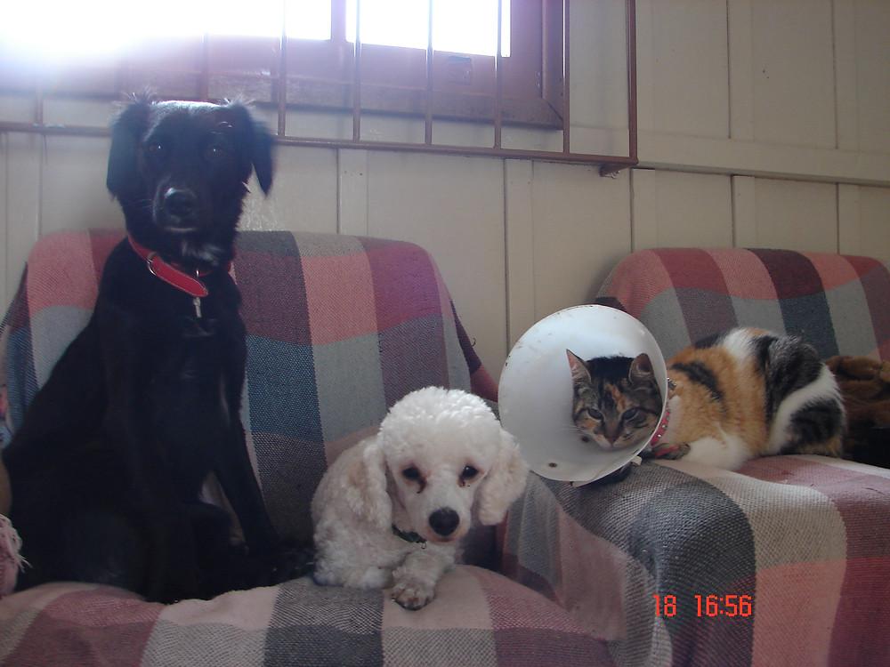 Nina, Chico e Mimi