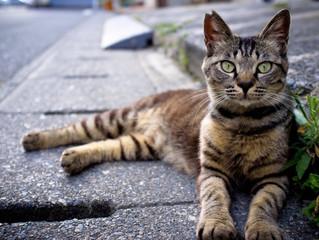 Oito dicas para você evitar o atropelamento de animais
