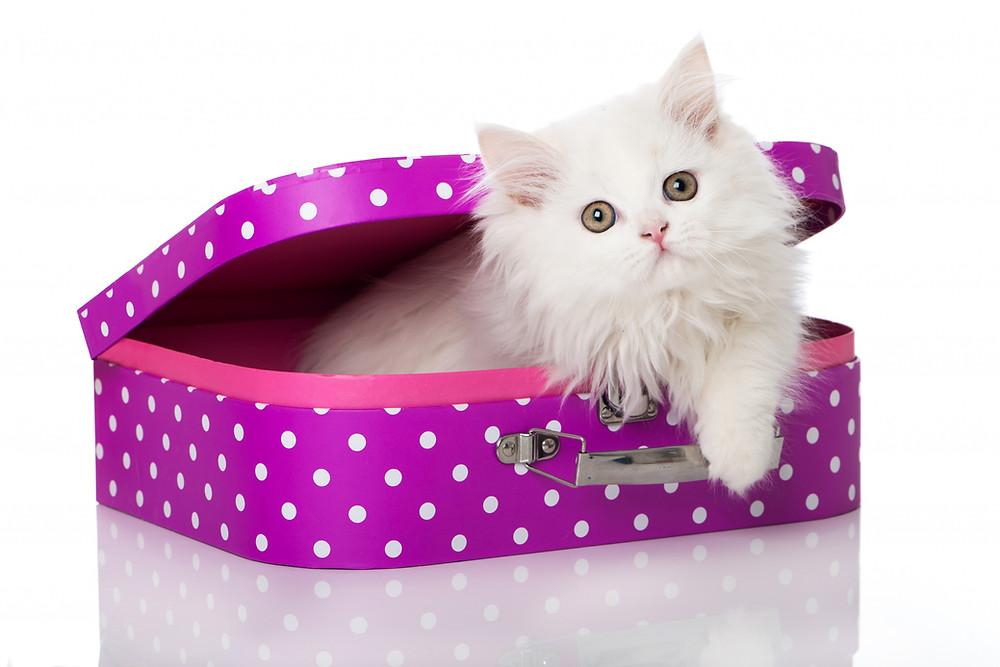Imagem disponível em: Cats_White_Suitcase_471471
