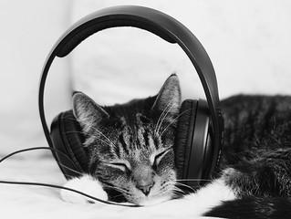 A Música para os gatos