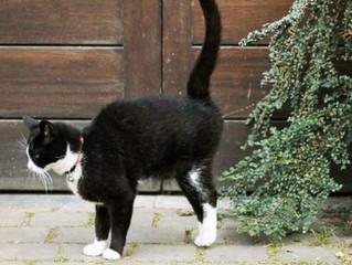 Xixi e Territorialismo dos Gatos