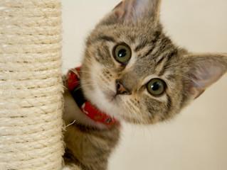 Novo gato na casa: dicas para facilitar a adaptação desse integrante na família