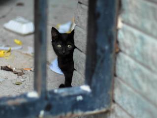 O que fazer quando encontrar um gato abandonado?