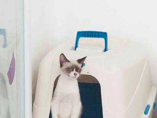 Tipos de areia higiênica para gato