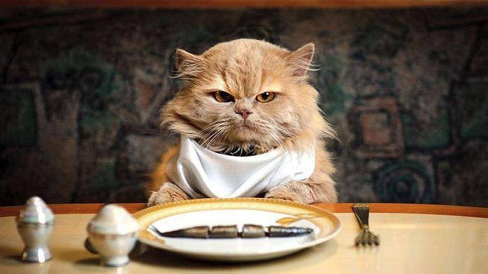 Imagem disponível em: http://vetclinic24horas.com.br/wp-content/uploads/2015/12/wallpaper-cat-eat-fish.jpg