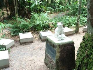 Você sabia? Único cemitério de gatos do mundo fica em Santa Catarina