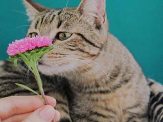 Gatos e plantas: benefícios e restrições