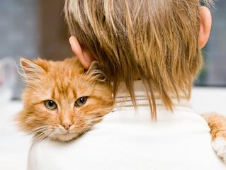 Por que adotar um gato?