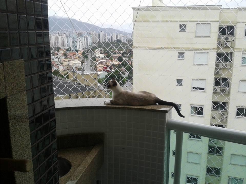 Foto: Security Rede de Proteção / Divulgação