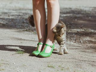 Saudações, humano: seu gato ao cumprimentá-lo