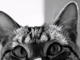 Os gatos veem fantasmas?