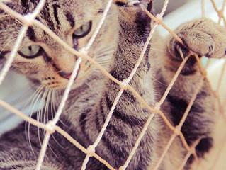Como garantir o bem-estar dos felinos em ambientes telados