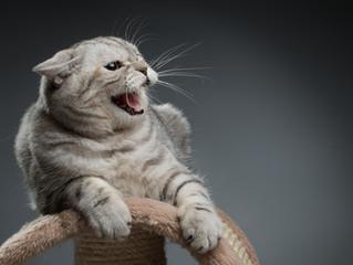 """Por que os gatos fazem """"fuu""""?"""
