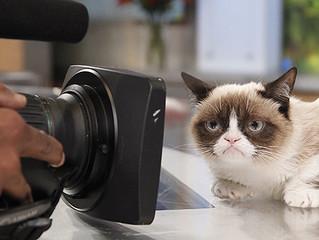 Gatos do cinema