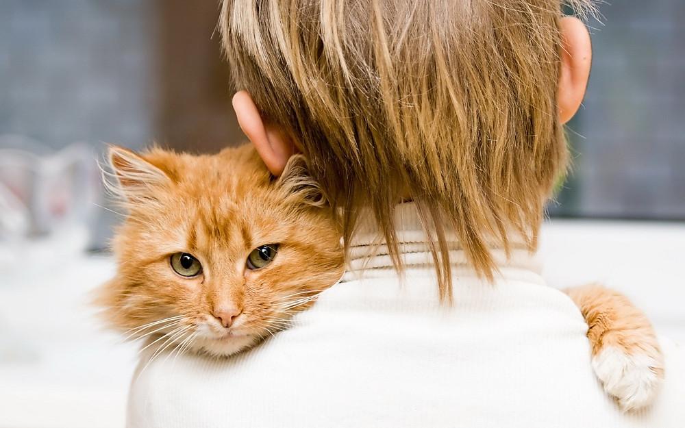 Imagem disponível em: http://www.papeldeparede.etc.br/fotos/wp-content/uploads/1440_Handsome-Cat.jpg
