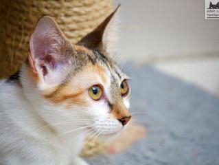 Conheça a Luiza, uma das gatinhas que esperam por adoção no Ronrom