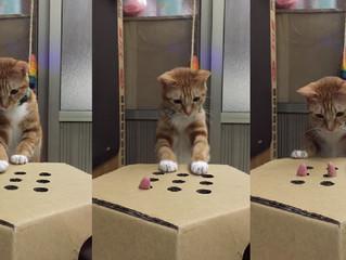 Brincadeiras para gatos