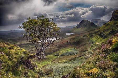 Rowan Tree Skye.jpg