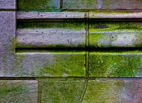 Moos und Algen auf Stein und Beton