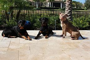 Aggressive Dog Training Denver