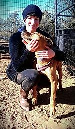 aggressive dog rehabilitation boston