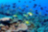 diving and snorkeling in playas del coco costa rica
