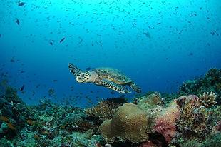 diving in playa panama costa rica