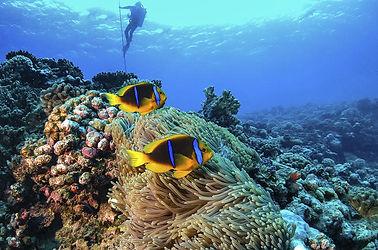diving in playas del coco costa rica papagayo
