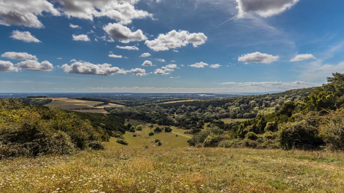 Kingley Vale Nature Reserve
